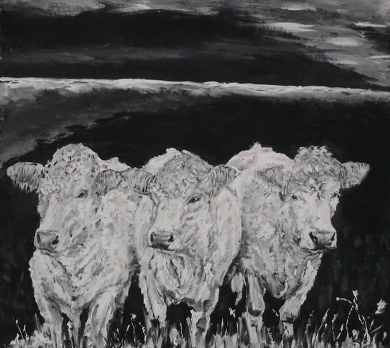 3 koeien in de wei