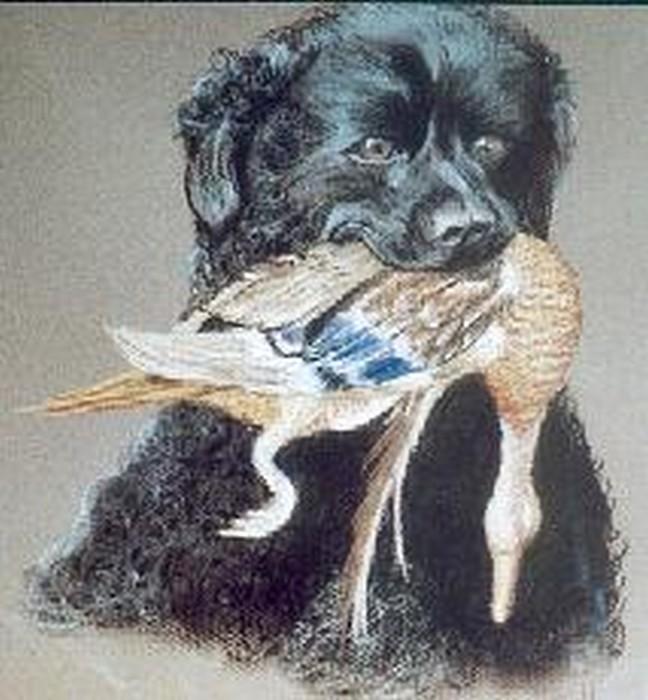 wetterhound met eend