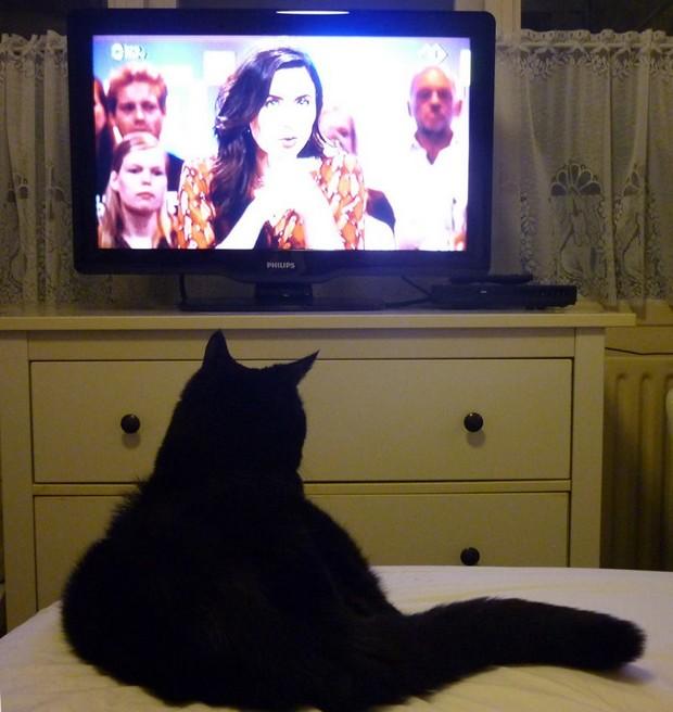 met Morro TV kijken